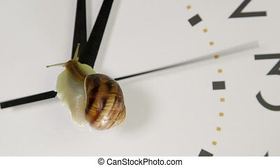 Snail On Face of Clock