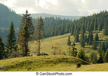 Landscape - Mountain landscape with green fields and pine...