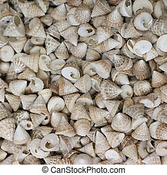 Lot of shells different sizes - Lot of shells of different...