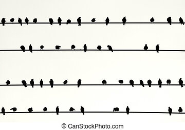 Swarm of birds in a Row - The Photography of birds sitting...