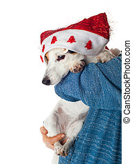Cute Jack Russell with christmas hat in the arms.