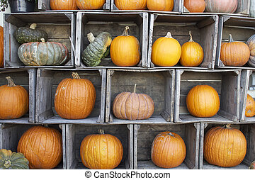 Pumpkin Display - A colorful display of pumpkins and gourds...