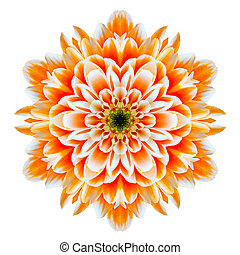 Orange Chrysanthemum Mandala Flower Kaleidoscope Isolated on White