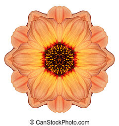 Orange Marigold Mandala Flower Kaleidoscope Isolated on...