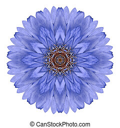 Blue Chrysanthemum Mandala Flower Kaleidoscope Isolated on...