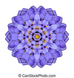 Mandala Flower Isolated Blue Iberis Kaleidoscope - Mandala...