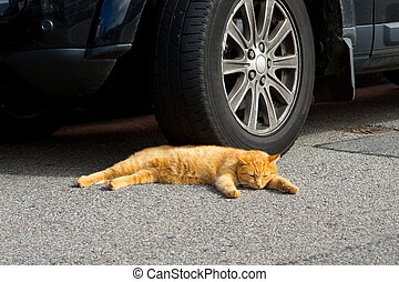 Tabby cat - a tabby cat asleep next to a car wheel