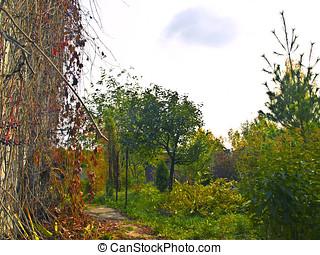 garden - autumnal garden