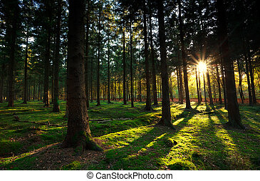 warm sunbeams in autumn forest - warm gold sunbeams in...