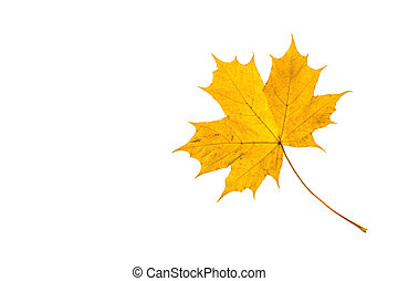 Autumn leaf - Fallen leaf in yellow colors at autumn time