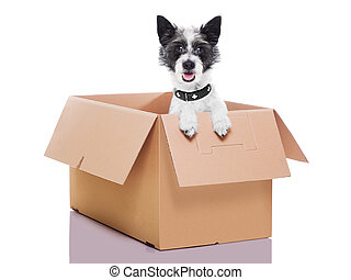 moving box dog - mail dog in a very big moving box