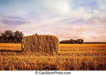 Harvested straw bale