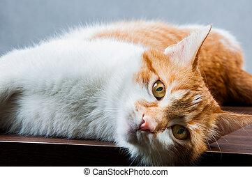Home beautiful cute cat - Cute young cat