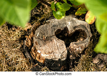 Heart in wood - Hole with the sape of a heart in wood