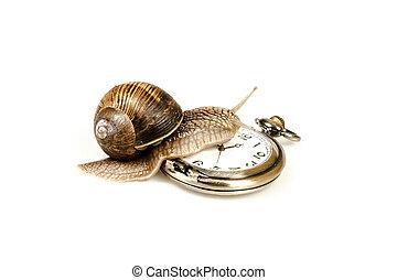 Escargot beating time - Escargot snail climbing on a vintage...