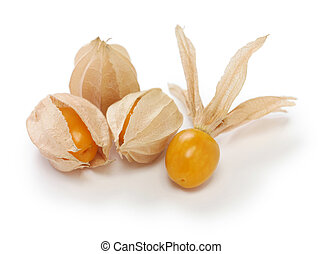 physalis - edible husk tomato