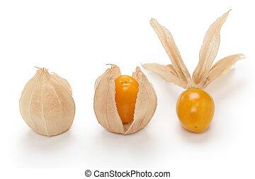 physalis - edible husk tomato