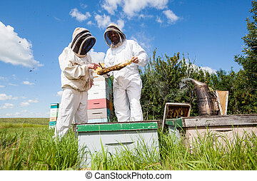 Beekeepers Examining Honeycomb At Apiary - Beekeepers in...