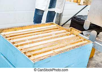 Closeup Of Honeycomb Frames In Apiary - Closeup of honeycomb...