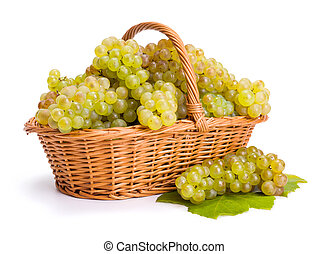 White grape clusters in basket after harvest