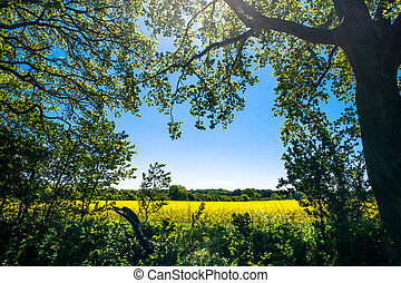 Forest clearing with a rapeseed field in the background