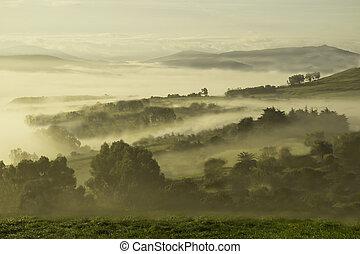 paramo con niebla - Paramo con niebla de tono verdoso, es al...