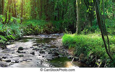 Field of grass and sunset - a river runs thru a virgin...