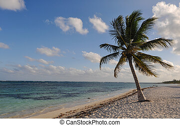 Palm Tree with Beach and Sand