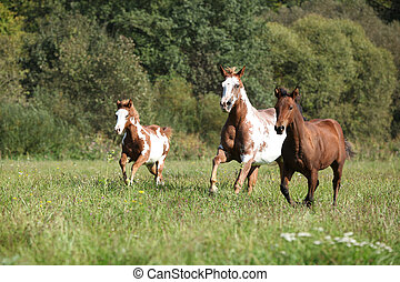 Group of horses running in freedom together