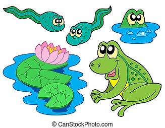 Żaba, zbiór
