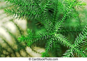 dennenboom