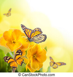 Yellow flowers and butterfly, a spring primrose