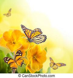 jaune, fleurs, papillon, Printemps, primevère