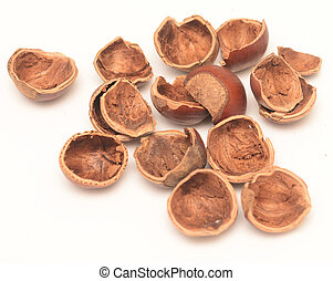 nut shell isolated on white background