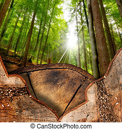 Trunk Sections in the Woods - Trunk sections in the...