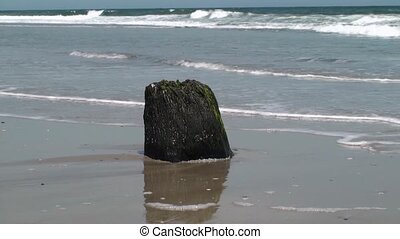 Stump at low tide