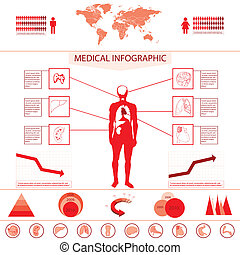 Medical information graphic with internal organs and charts...