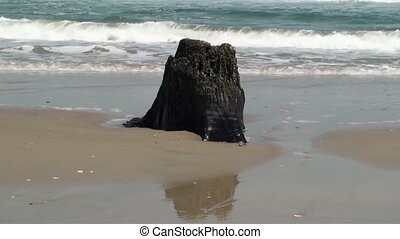 Waves over a stump at low tide