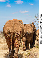 rear view of an elephants