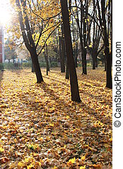 Autumn park with trees and leaves