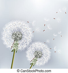 Stylish floral background with two flowers dandelions...
