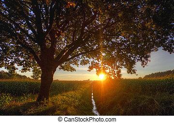 Maisfelder im Sonnenaufgang - Maisfelder und Baum im Schein...