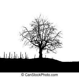 Monochromatic Tree Silhouette 3 - Silhouette of a tree on a...