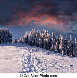 Fantastic sunset in the mountain forest
