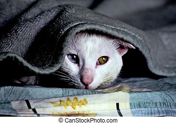 Meditative Cat - A cat under the blanket thinking about her...