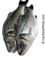 two sea bass - two fresh sea bass