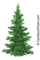 Christmas fir tree, isolated - Tree, green Christmas fir...