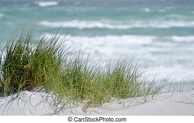 Dune grass... - Landscape with Atlantic Ocean and dune grass