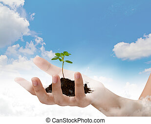 Business hand holding green small plant over blue sky with...