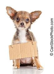 Chihuahua, 藏品,  puppie, 狗, 紙板, 無家可歸, 空